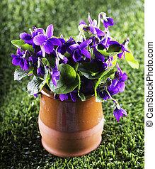 Violets in a vase over green grass, vertical image