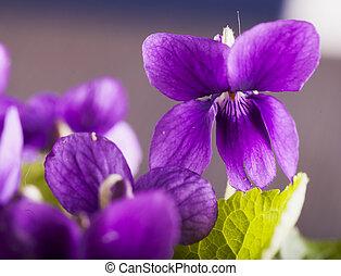 violett, in, a, bukett
