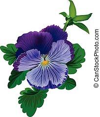 violett, stiefmütterchen, blume, mit, blätter, und, knospe