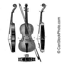 Violin structure, vintage engraving
