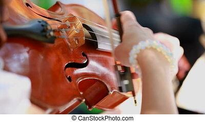 Violinist plays the violin