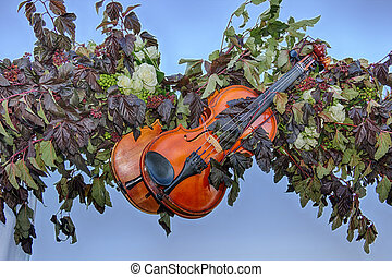Violins and nature