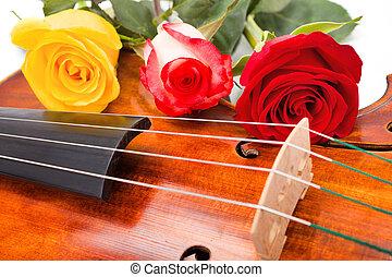 viool, bloemen