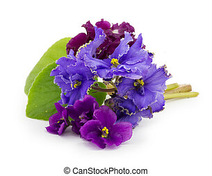 viooltje, bloem