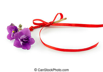 viooltje, bloem, vrijstaand, op wit, achtergrond