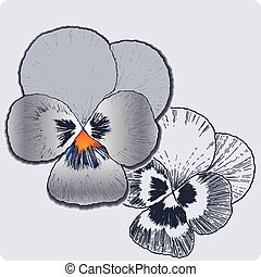 viooltje, hand-drawing., bloem, vector.
