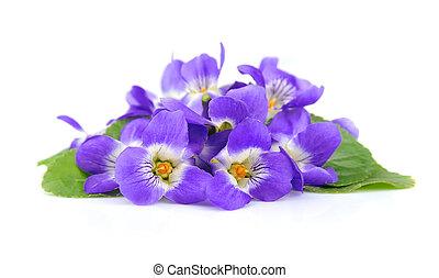 viooltjes, bloemen