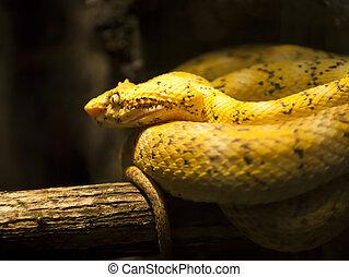 Viper - Poisonous Viper