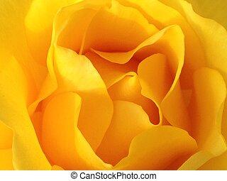 virág, sárga
