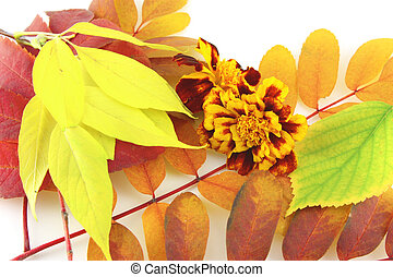 virág, szín, elvont, ősz, háttér, zöld