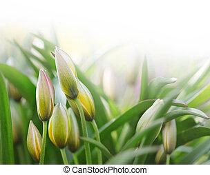 virágbimbó, alatt, zöld fű