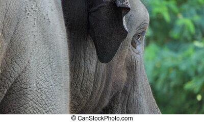 virages, tête, lentement, côté, elephant`s