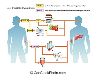 viral, hepatitis, infección