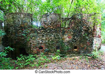 Virgin Islands Tropical Forest