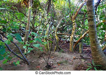 Virgin Islands Tropical Vegetation