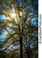 virginia., através, sol, árvores, monticello, brilhar