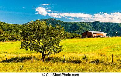 virginia., fa, shenandoah, istálló, appalachians, völgy, kilátás