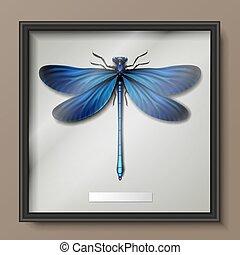 virgo, libélula, calopteryx