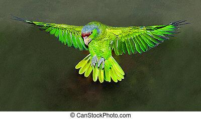 viridigenalis, red-crowned, loro, vuelo, amazon, amazona