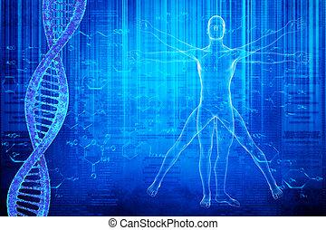 virtuvian, adn, molécules, homme