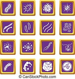 Virus bacteria icons set purple