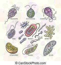 Virus vector bacterial infection virus-like illness...