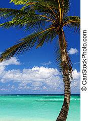 visão cênica, ligado, mar do caribe