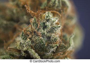 "visível, macro, cabelos, detalhe, ""mango, marijuana, puff"", tensão, cannabis, broto"