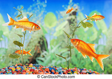 vis tank, met, goudvis