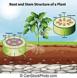 visande, stam, växt, rot, struktur, diagram