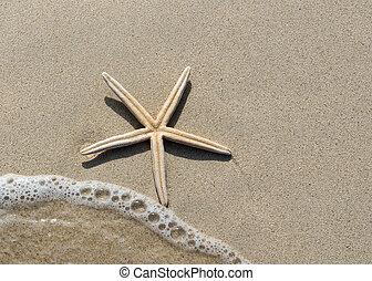visión de arriba, de, un, estrellas de mar