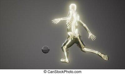 visible, balayage médical, joueur, os, football