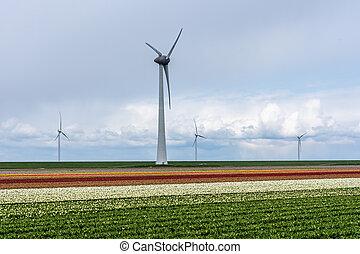 visible., barvitý, tulipán, turbína, doletět, čtyři, bojiště...