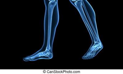 Visible bones - Medical animation of a walking guy - visible...