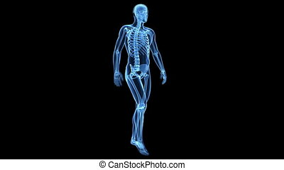 Visible bones - Medical animation of a walking guy - visible...