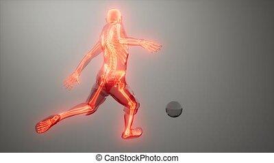 visible, joueur, balayage, os, monde médical, football