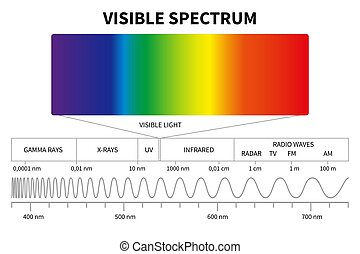 Visible light diagram. Color electromagnetic spectrum, light wave frequency. Educational school physics vector background