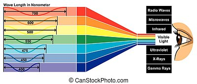Visible Light with wave length diagram Vector Visible Light ...