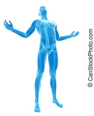 Visible skeleton - 3d rendered illustration of a male posing...