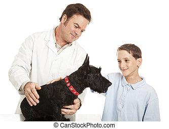visite, à, les, vétérinaire