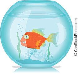 visje, aquarium, goud