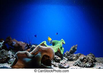 visje, aquarium
