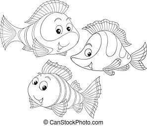 vissen, coraal