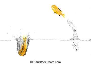 vissen, vrolijke
