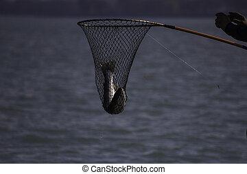 visserij, op, meer michigan