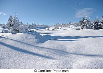 vista, árvores, inverno, superfície, neve