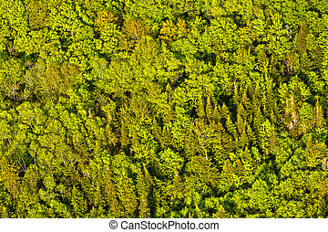 vista aérea, de, árvores verdes, floresta, em, quebec,...