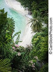 vista aérea, de, agradável, praia tropical, com, algum, palmas