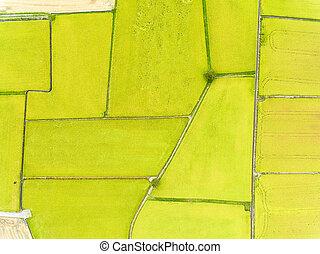 vista aérea, de, campos arroz
