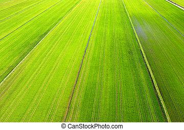 vista aérea, de, colheita
